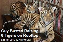 Guy Busted Raising 6 Tigers on Rooftop