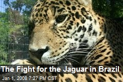 The Fight for the Jaguar in Brazil