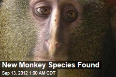 New Monkey Species Found