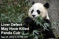 Liver Defect May Have Killed Panda Cub