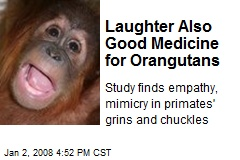 Laughter Also Good Medicine for Orangutans