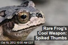 Rare Frog's Cool Weapon: Spiked Thumbs