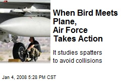 When Bird Meets Plane, Air Force Takes Action