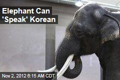 Koshik the asian elephant can speak five words of Korean