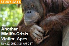 Apes Suffer Midlife Misery, Too