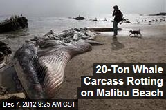 20-Ton Whale Carcass Rotting on Malibu Beach
