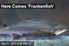 Here Comes 'Frankenfish'