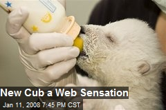 New Cub a Web Sensation
