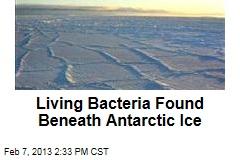 Living Bacteria Found Beneath Antarctic Ice
