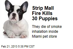 Strip Mall Fire Kills 30 Puppies