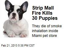 Strip Mall Fire Kills 30 Puppies