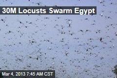 30M Locusts Swarm Egypt