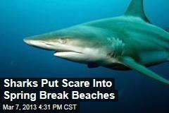 Sharks Put Scare Into Spring Break Beaches