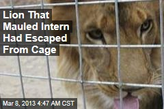 Lion That Mauled Intern Had Escaped From Cage