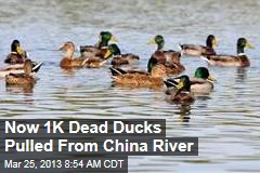 Now 1K Dead Ducks Pulled From China River