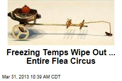 Freezing Temps Wipe Out ... Entire Flea Circus