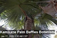 Kamikaze Palm Baffles Botanists