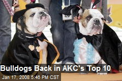Bulldogs Back in AKC's Top 10