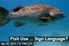 Fish Use ... Sign Language?