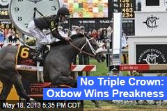 No Triple Crown: Oxbow Wins Preakness