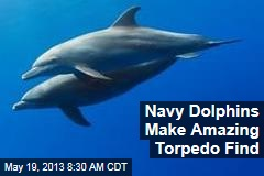 Navy Dolphins Make Amazing Torpedo Find