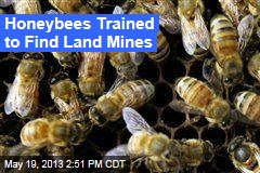 Honeybees Trained to Find Land Mines