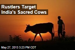 Rustlers Target India's Sacred Cows