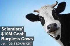 Scientists' $10M Goal: Burpless Cows