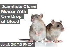 Scientists Clone Mouse With One Drop of Blood