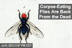 Corpse-Eating Flies Are Back From the Dead