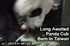 Long Awaited Panda Cub Born in Taiwan