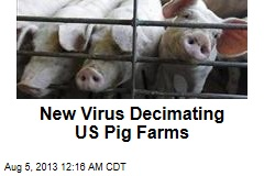 New Virus Decimating US Pig Farms