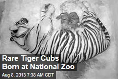 Rare Tiger Cubs Born at National Zoo