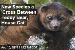 New Species a 'Cross Between Teddy Bear, House Cat'