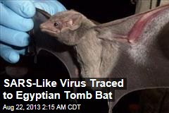 SARS-Like Virus Traced to Egyptian Tomb Bat