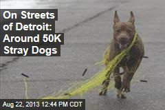 On Streets of Detroit: Around 50K Stray Dogs