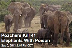 Poachers Kill 41 Elephants With Poison