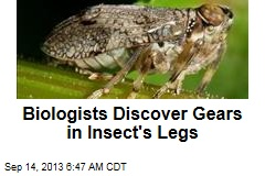 Biologists Discover Gears in Insect's Legs