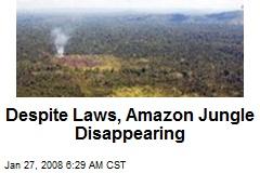 Despite Laws, Amazon Jungle Disappearing