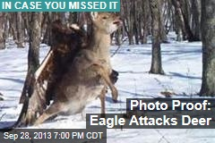 Photo Proof: Eagle Attacks Deer