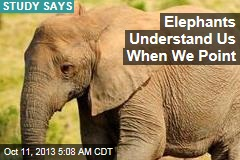 Elephants Understand Us When We Point