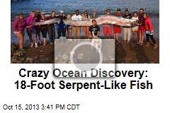 Crazy Sea Find: 18-Foot Fish