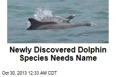 New Species of Dolphin Needs a Name