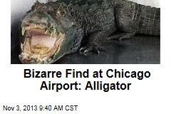 Bizarre Find at Chicago Airport: Alligator