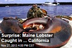 Surprise: Maine Lobster Caught in ... California