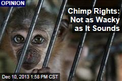 Chimp Rights: Not as Wacky as It Sounds