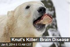 Knut's Killer: Brain Disease