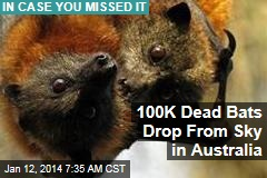 100K Dead Bats Drop From Sky in Australia