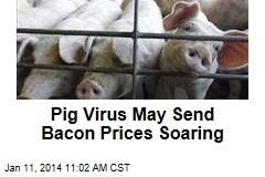 Pig Virus May Send Bacon Prices Soaring