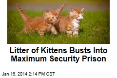 Litter of Kittens Busts Into Maximum Security Prison